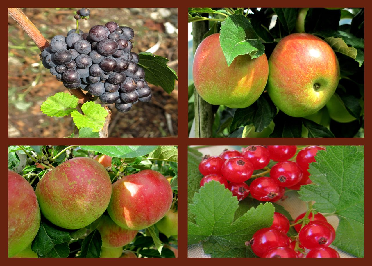 Foto Obst richtig lagern
