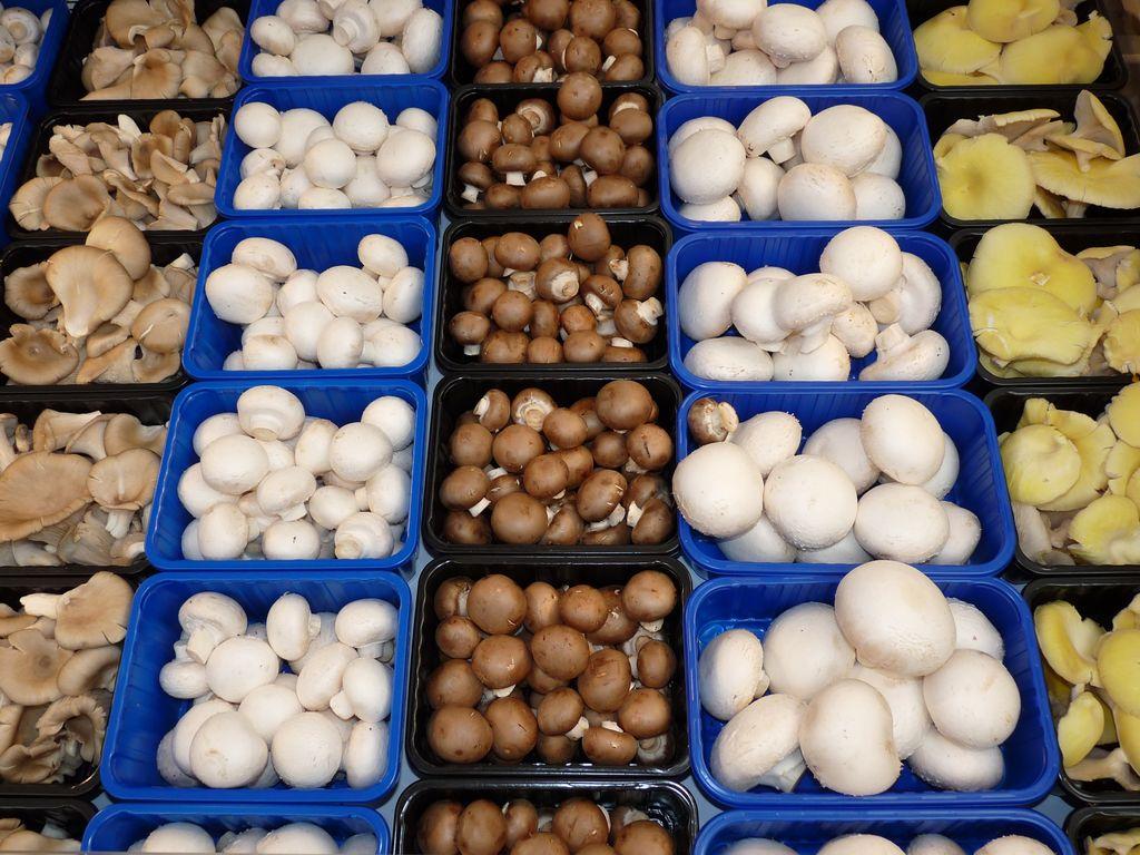 Gesund ernähren mit Pilzen